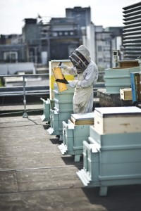 Beehives on the roof of Fortnum and Mason